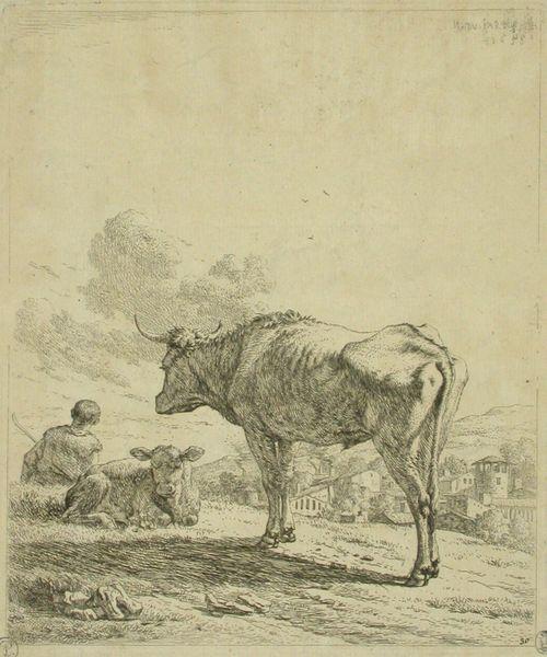 Härkä ja vasikka