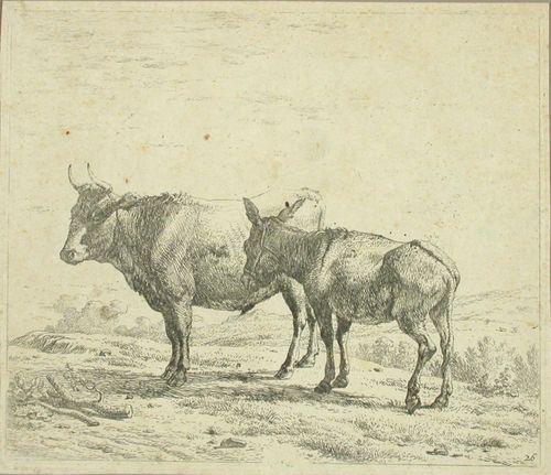 Härkä ja aasi