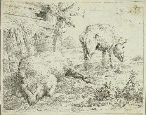 Kaksi sikaa