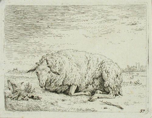 Makaava lammas