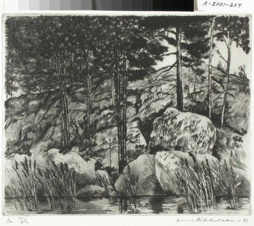Kivet ja kaislat