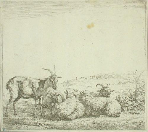 Vuohia ja lampaita