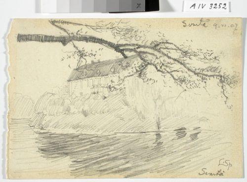 Svartå, etualla joki, ylhäällä puun oksa