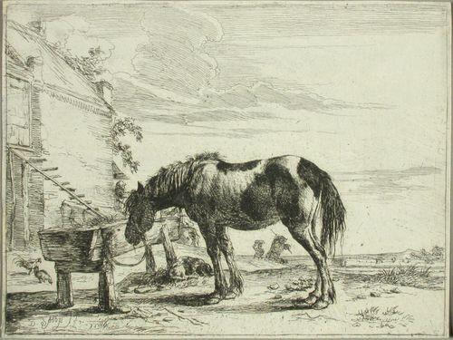 Juomakaukaloon sidottu hevonen