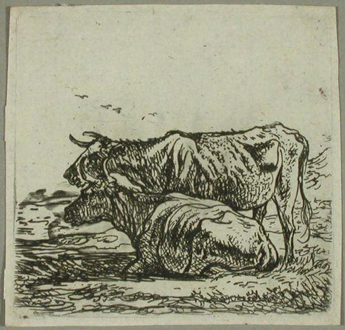 Kaksi lehmää