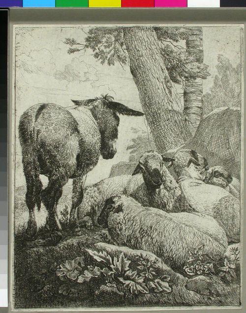 Aasi ja lampaita