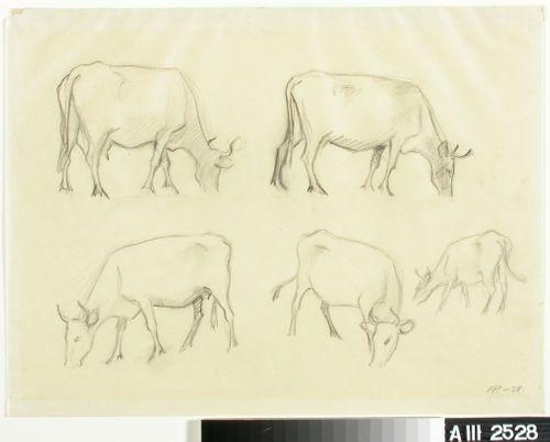 Lehmiä