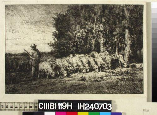 Lammaspaimen syöttää laumaansa metsän reunassa