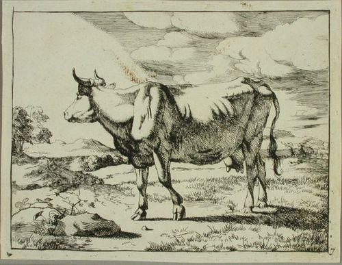 Poispäin katsova seisova lehmä