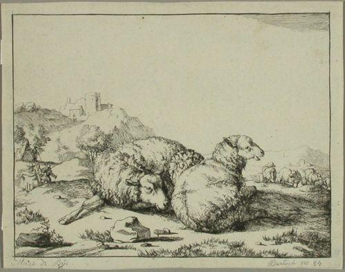 Kaksi lepäävää lammasta