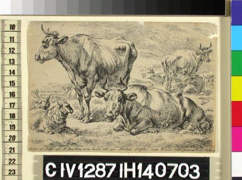Makaava ja seisova lehmä