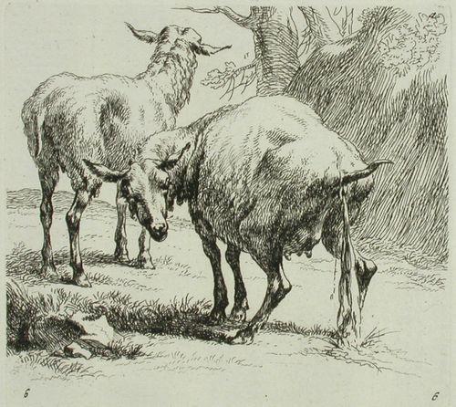 Kaksi lammasta, joista toinen virtsaa