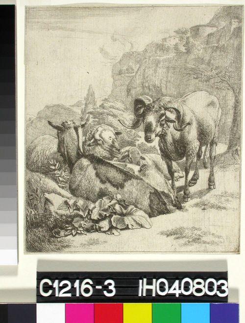 Pässi, vuohi ja lampaita