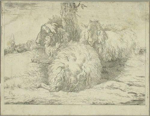 Kaksi lammasta puun juurella