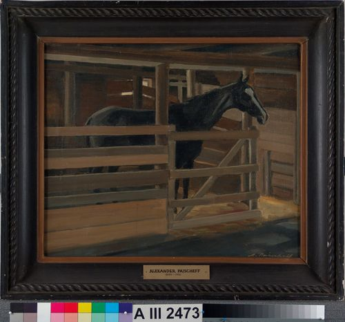 Jallu, musta hevonen pilttuussaan
