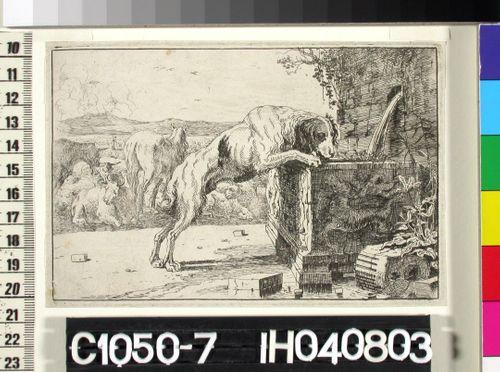 Koira vesialtaalla