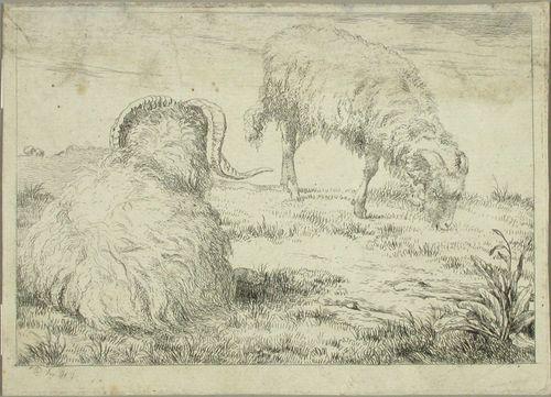 Kaksi lammasta
