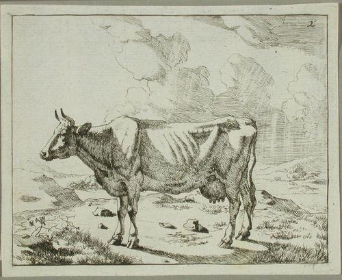 Seisova lehmä sivulta