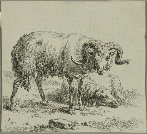 Pässi ja makaava lammas