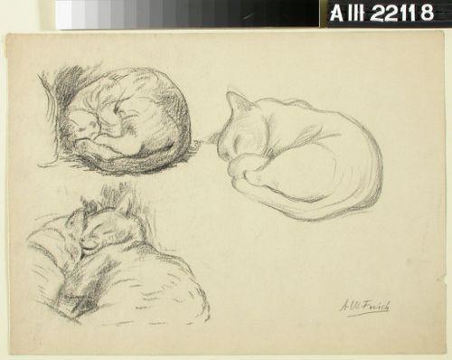 Harjoitelmia, nukkuva kissa