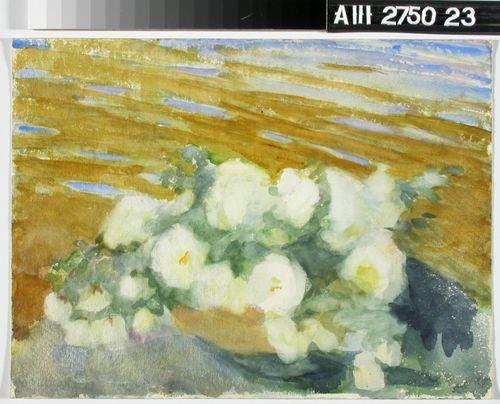 Valkoisia ruusuja maljakossa