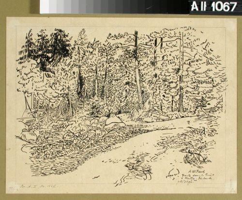 Skogsväg vid Kullo nära Borgå