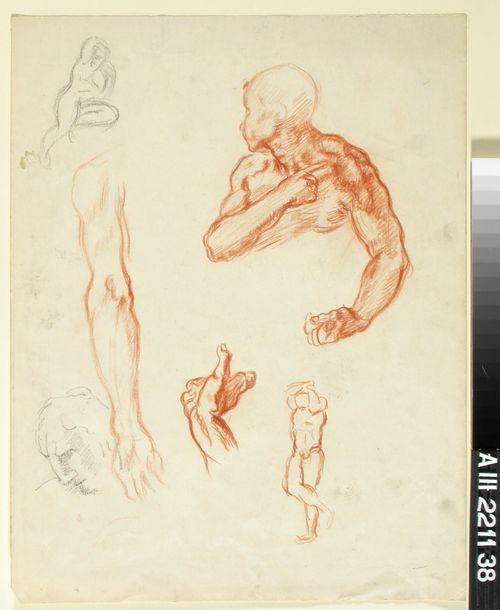 Anatomisia harjoitelmia