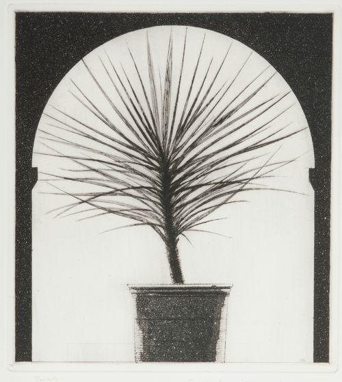 Jucca palm